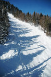 Foresta in inverno Fotografia Stock Libera da Diritti