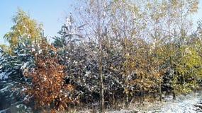 Foresta in inverno Fotografie Stock Libere da Diritti