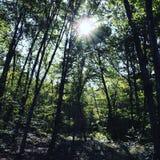 Foresta in Italia Immagini Stock Libere da Diritti