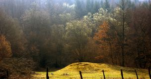 Foresta italiana Fotografia Stock