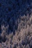 Foresta italiana delle alpi di inverno Immagine Stock