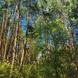 Foresta a Kiev Fotografie Stock Libere da Diritti