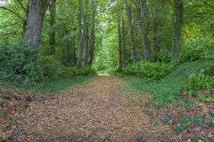 Foresta in Lavardin Fotografie Stock