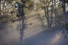 Foresta leggera Fotografia Stock Libera da Diritti