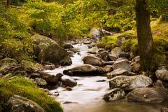 Foresta leggiadramente con il fiume Fotografia Stock Libera da Diritti