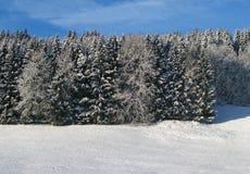 Foresta leggiadramente di inverno Fotografia Stock