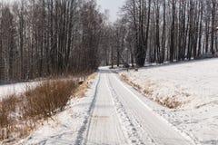 Foresta leggiadramente di inverno nella neve Orario invernale Caduta pesante della neve di inverno Alberi di inverno nella neve B Fotografia Stock