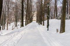 Foresta leggiadramente di inverno nella neve Orario invernale Caduta pesante della neve di inverno Alberi di inverno nella neve B Fotografie Stock