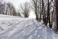 Foresta leggiadramente di inverno nella neve Orario invernale Caduta pesante della neve di inverno Alberi di inverno nella neve B Immagini Stock Libere da Diritti