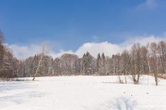 Foresta leggiadramente di inverno nella neve Orario invernale Caduta pesante della neve di inverno Alberi di inverno nella neve B Immagini Stock
