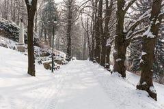 Foresta leggiadramente di inverno nella neve Orario invernale Caduta pesante della neve di inverno Alberi di inverno nella neve B Immagine Stock