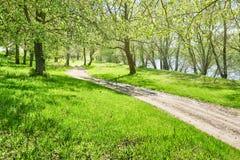 Foresta luminosa con luce solare al giorno soleggiato, belle terre di estate Immagine Stock