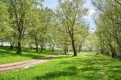 Foresta luminosa di estate al giorno soleggiato, al bello paesaggio, all'erba verde ed agli alberi Fotografia Stock