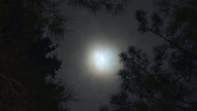 Foresta, luna e nuvole di volo Timelapse stock footage