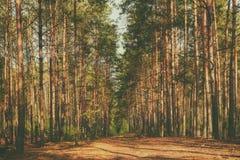 Foresta lunatica scura Immagine Stock Libera da Diritti