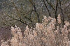 Foresta lunga d'ondeggiamento Autumn Brown Background Tall selvaggio del vento dell'erba Fotografie Stock Libere da Diritti