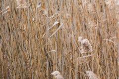 Foresta lunga d'ondeggiamento Autumn Brown Background Tall selvaggio del vento dell'erba Fotografia Stock