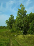 Foresta lungo la strada di estate Immagine Stock Libera da Diritti