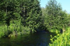 foresta lungo le rive del fiume fotografia stock libera da diritti