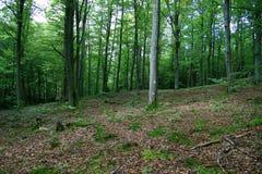 Foresta magica Immagini Stock