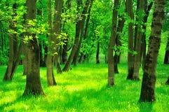 Foresta magica Fotografie Stock