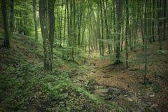 Foresta magica Immagine Stock Libera da Diritti