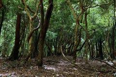 Foresta magica Immagine Stock