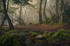 Foresta magica autunnale nella nebbia Fotografia Stock Libera da Diritti