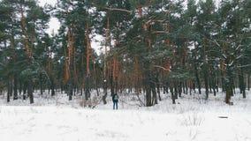 Foresta magica di inverno Fotografie Stock