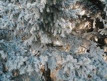 Foresta magica di inverno Immagini Stock