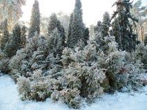 Foresta magica di inverno Immagini Stock Libere da Diritti