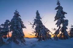 Foresta magica di inverno coperta al tramonto Immagini Stock Libere da Diritti