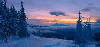 Foresta magica di inverno coperta al tramonto Fotografia Stock Libera da Diritti