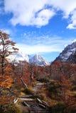 Foresta magica misteriosa a Cerro Torre in Argentina fotografie stock libere da diritti