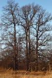 Foresta magica nella stagione di autunno Fotografia Stock