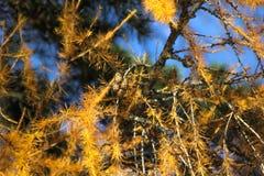 Foresta magica stupefacente nell'inverno Fotografia Stock