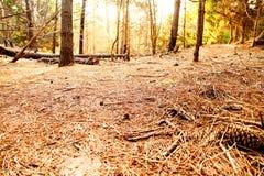 Foresta marzo in de las Pampa Immagini Stock Libere da Diritti