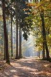 Foresta mista come la natura ed ecosistema nel sole fotografie stock libere da diritti