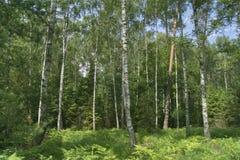 Foresta mista densa fotografia stock libera da diritti