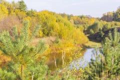 Foresta mista di giallo di panorama del paesaggio di autunno del fondo Immagini Stock Libere da Diritti