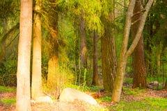 Foresta mista in molla in anticipo fotografie stock libere da diritti