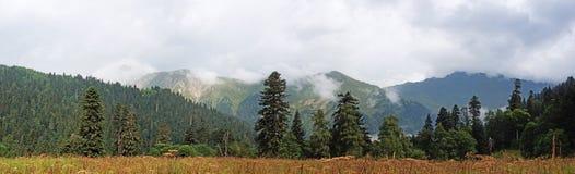 Foresta mista selvaggia Fotografia Stock