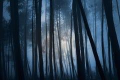 Foresta misteriosa Fotografia Stock