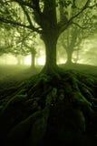 Foresta misteriosa Immagini Stock