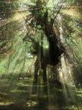 Foresta misteriosa Immagini Stock Libere da Diritti