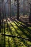 foresta misteriosa Fotografie Stock