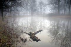 Foresta misteriosa alla mattina nebbiosa immagini stock libere da diritti