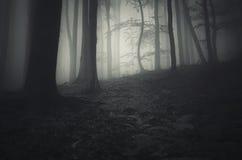 Foresta misteriosa frequentata con nebbia Fotografia Stock