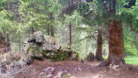 Foresta misteriosa nelle montagne Fotografie Stock Libere da Diritti