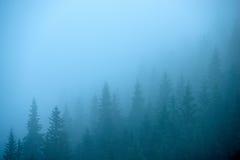 Foresta misteriosa surreale dell'abete nella nebbia Fotografia Stock